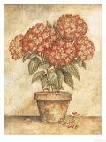 Hortensia en maceta roja Póster por Tina Chaden