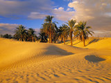 Sand Dunes and Oasis, Desert, Tunisia Fotografisk tryk af Peter Adams