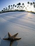 Beach at Zanzibar, Tanzania Fotografie-Druck von Peter Adams