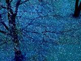 Autumn Tree in Blue, Green, and Purple Fotoprint van Robert Cattan