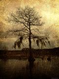 Cypress Fotoprint van Lydia Marano