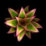 Cactus Star Photographic Print by Robert Cattan