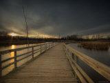 Marsh Path Photographic Print by Irene Suchocki