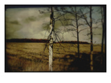 Broken Branches on Tree Photographic Print by Mia Friedrich