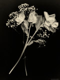Wilted White Rose and Baby's Breath in Black and White Fotoprint van Robert Cattan