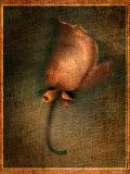 Orange Flower Photographic Print by Robert Cattan