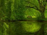Green World Premium-Fotodruck von Irene Suchocki