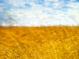 Golden Grass in the Wind Photographic Print by Robert Cattan