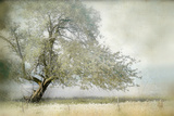 Tree in Field of Flowers Premium fotoprint van Mia Friedrich