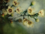 Flowers Strewn Photographic Print by Irene Suchocki