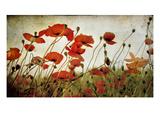 Orange Flower Patch Photographic Print by Mia Friedrich