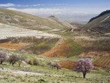 Niha, Bekaa Valley, Lebanon Fotografie-Druck von Ivan Vdovin