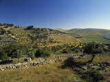 Shepherds Fields, Bethlehem, Israel Fotografisk trykk av Jon Arnold
