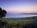 Sea of Galilee, Israel Fotografisk trykk av Jon Arnold