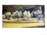 Study of Olive Trees, no.2 Giclée-Druck von Helen J. Vaughn