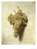 Raisons Blancswhite Grapes Giclee Print by Louis Leopold Boilly