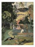 Matamoe Giclee Print by Paul Gauguin