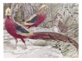 Gold Pheasant Giclee Print by Wilhelm Kuhnert