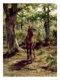 Stag on Alert in Wooded Clearing Giclee Print by Rosa Bonheur