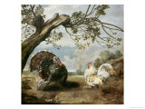 Cock and Turkey Giclée-Druck von Paul De Vos