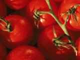 Tomatoes on Vine Lámina fotográfica por Mitch Diamond