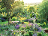 View into Country Garden with Blue and Pink Colour Plants Summer Fotografie-Druck von Lynn Keddie