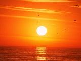 Birds Flying at Sunset, Playa Del Rey, CA Fotografisk trykk av Harvey Schwartz