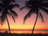 Silhouette of Trees at the Beach at Sunset, FL Photographic Print by Don Romero