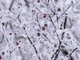 Winnipeg Manitoba, Canada Winter Scenes Stampa fotografica di Keith Levit