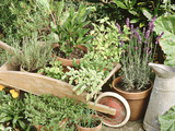 Herbs in Pots Rosemary/Bay/Marjoram Sage, Wheelbarrow & Metal Jug Fotografie-Druck von Lynne Brotchie