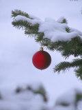 X Mas Ornament on Tree Stampa fotografica di Mike Robinson