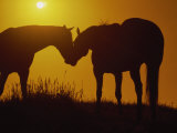 Silhouette of Horses at Sunset Photographic Print by Jerry Koontz