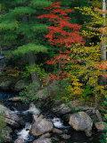 Fall Scenic, Acadia National Park, Maine Stampa fotografica di Elizabeth DeLaney