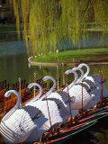 Swan Boats, the Public Garden, Boston, MA Photographic Print by Kindra Clineff