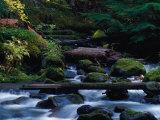 Royal Creek, OR Fotografisk tryk af Frank Staub