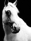 White Horse Photographic Print by Tim Lynch