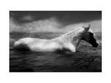 Weisses Pferd Swimming Fotografie-Druck von Tim Lynch