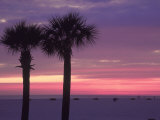 Palm Trees at Dusk, St. Petersburg Beach Fotografisk tryk af Jeff Greenberg