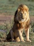 Male Lion, East Africa Stampa fotografica di Elizabeth DeLaney