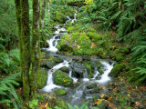 Waterfall at Mt. Rainer Rain Forest Fotografisk tryk af Charles Benes
