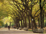 People Walking Through Central Park in Autumn, NYC Impressão fotográfica por Walter Bibikow