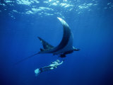 Diver Swims with Giant Manta Ray, Mexico Fotografie-Druck von Jeffrey Rotman
