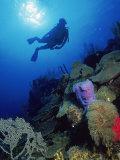 Silhouette of Scuba Diver Underwater, Honduras Fotografie-Druck von Shirley Vanderbilt