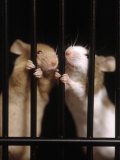 Two Mice Behind Bars Fotografie-Druck von Rudi Von Briel