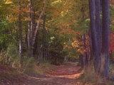 Autumn Trees in Vermont Fotografie-Druck von Sally Brown