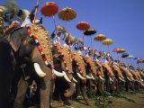 The Great Elephant March, Trissur, Kerala, India Impressão fotográfica por David Ball