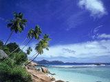 Palm Trees and Ocean, La Digue, Seychelles Fotografisk tryk af David Ball