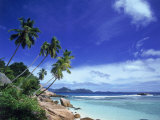 Palm Trees and Ocean, La Digue, Seychelles Photographic Print by David Ball