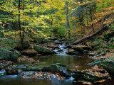Ricketts Glen State PArk, PA Fotografie-Druck von Jim Schwabel