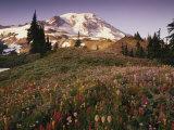 Alpine Summer Wildflowers, Mt. Rainer National Park Photographic Print by Stuart Westmorland